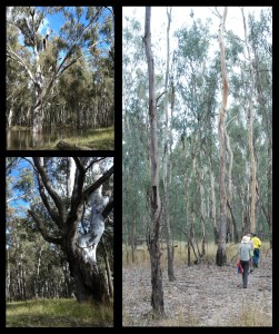 A chance for some field work in these beautiful inland riverine forests.